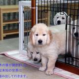 ホープの仔犬 2013.07.02.生れⅣ お別れ会(最終版)-1