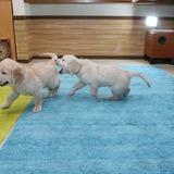ホープの仔犬 2013.07.02.生れⅣ お別れ会(最終版)-2