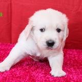 ホープの仔犬2013.07.02.生れⅢ-2     生後1ヶ月 ♂緑、♂紫、♀赤