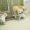 ホープの仔犬 2019.06.05.生れⅣ お別れ会(7月25日撮影)-3