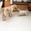 ホープの仔犬 2014.12.03.生れⅤ    1月30日撮影 お別れ会-1