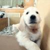 エマの仔犬 2014.12.19.生れⅣ   2月20日撮影 お別れ会(最終)