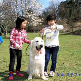 パルマの仔犬 2018.08.16.生れⅠ 生後20日-1