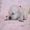 パルマの仔犬 2018.08.16.生れⅠ 生後20日-2