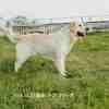 メグ(♀)2014.03.31.生れ 父:レオナルドオブザヘラクレス アクレス 母:グレンキングダブルデライト