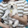 ホープの仔犬 2019.06.05.生れⅡ 父犬:エミル 生後25日-2