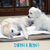 ひまわりの仔犬 2021年4月10日生れⅢ お別れ会(6月5日撮影)-1