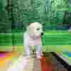 ホープの仔犬 2019.06.05.生れⅢ 父犬:エミル 生後38日-2