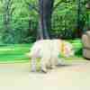 ホープの仔犬 2019.06.05.生れⅣ お別れ会(7月25日撮影)-1