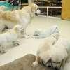 ホープの仔犬 2019.06.05.生れⅣ お別れ会(7月25日撮影)-2