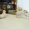 ホープの仔犬 2019.06.05.生れⅤ お別れ会Ⅱ(8月13日撮影)