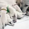 パルマの子犬 2019.12.16.生れⅠ 父犬:ピース 12月18~20日撮影