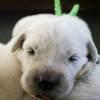 パルマの子犬 2019.12.16.生れⅡ 父犬:ピース 12月27日撮影