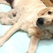 1/6(月) ホープ出産。詳細はPuppiesをご覧ください。