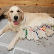 2014.12/03(水) ホープ出産。詳細はPuppiesをご覧ください。