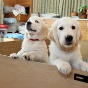Puppiesにエマの仔犬Ⅳ お別れ会(最終版)をアップしました