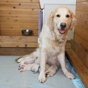 2015.08.28.(金) エマ 出産 詳細は Puppies をご覧ください。