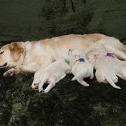 Puppiesに「エマの仔犬Ⅱ 3週齢」をアップしました
