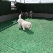 Puppies に 「エマの仔犬Ⅳ お別れ会 1」 をアップしました。