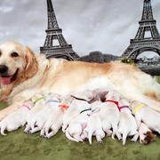 2016.07.18.(月) ホープ出産 詳細は Puppies をご覧ください。