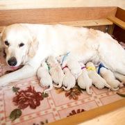 2017.03.27.(月) メグ出産 詳細は Puppies をご覧ください。