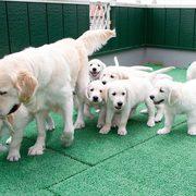 Puppies にメグの仔犬 2017年3月生れⅣ-1,2 をアップしました。