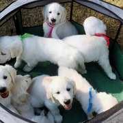 Puppies にパルマの仔犬 2018年8月生れⅢを アップしました。