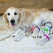 2018年11月1日(木) ホープ出産  詳細は Puppies をご覧ください。