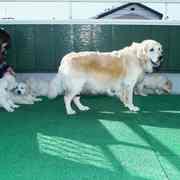 Puppies にホープの仔犬 2018年11月生れⅣ-1,2をアップしました。