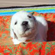 Puppies にパルマの仔犬 2019年12月生れⅢを アップしました。
