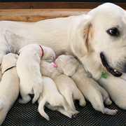 Puppies にパルマの仔犬 2019年12月生れⅡを アップしました。