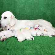 2020年8月14日(金) ひまわり出産 詳細は Puppies をご覧ください。