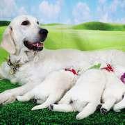 Puppies にひまわりの仔犬 2021年4月10日生れⅡを アップしました。